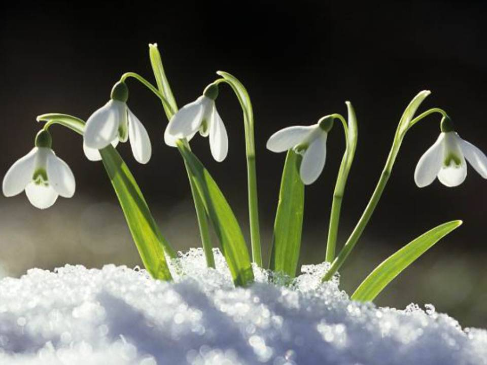 Imbolc: The holiday of hope