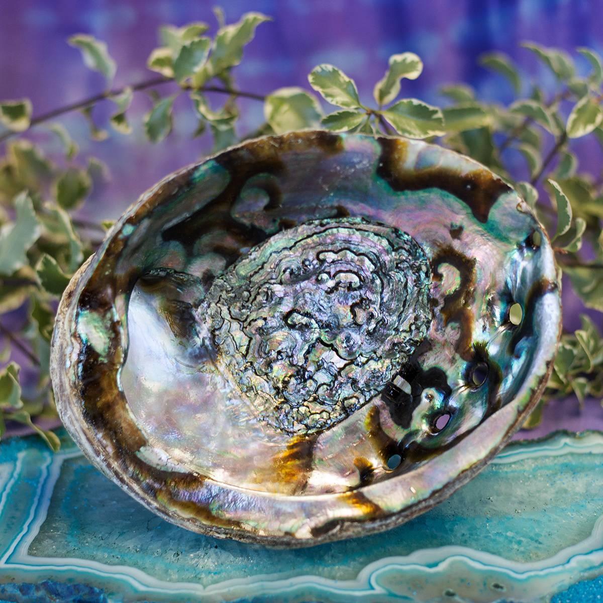 Abalone Shell 1_28