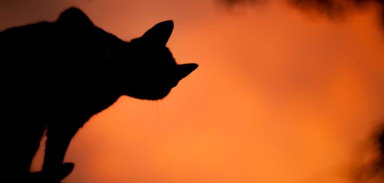 The Mystery of Samhain