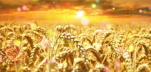 Honoring Lammas – The First Harvest