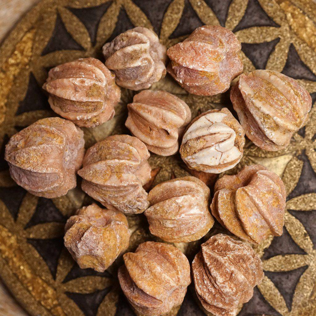 blastoid fossils