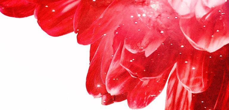 How to Feel Safe by Balancing your Root Chakra