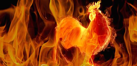 Year of the Fire Rooster: Success, Luck, and Love in 2017