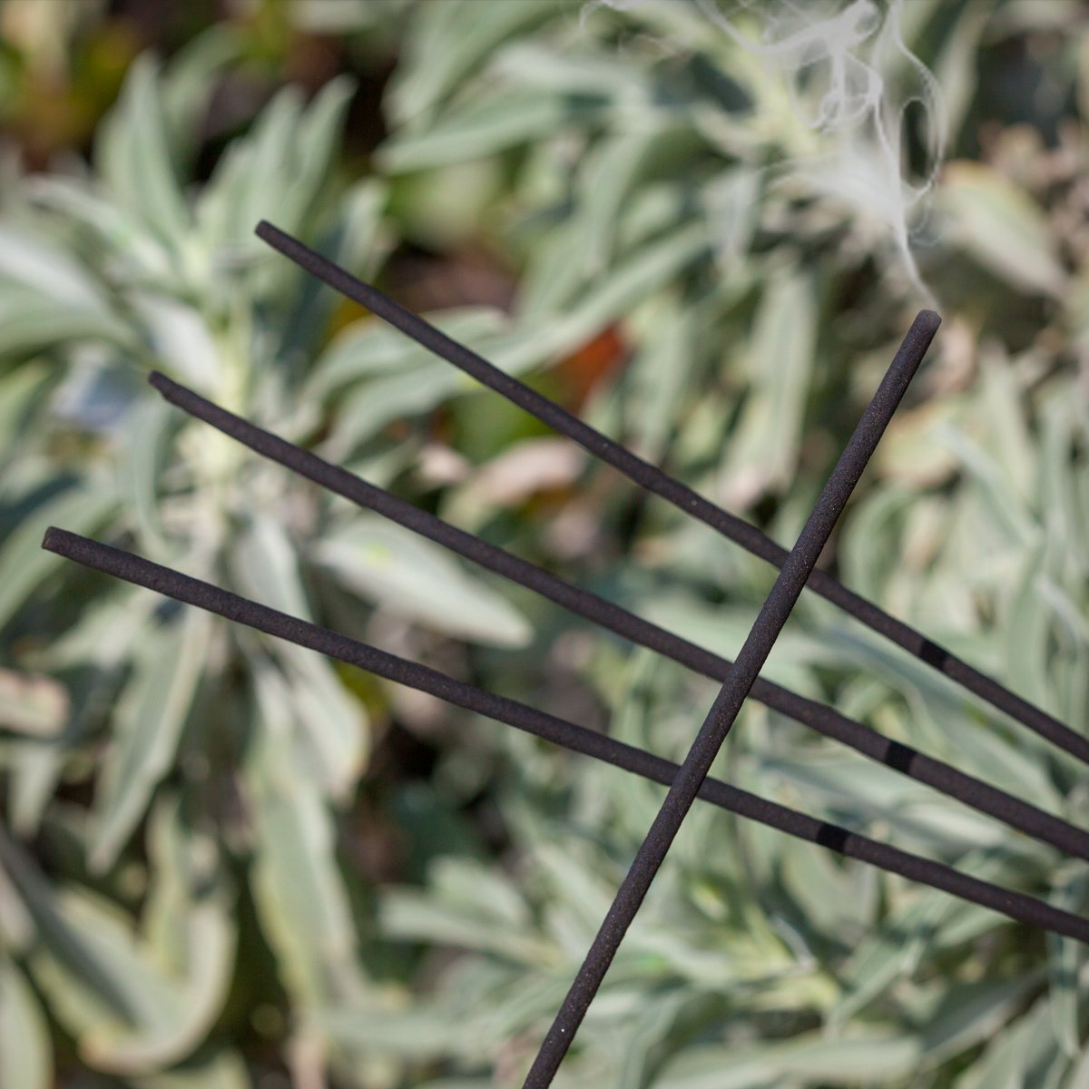 White Sage Incense Sticks For Purification Of Your Sacred Space