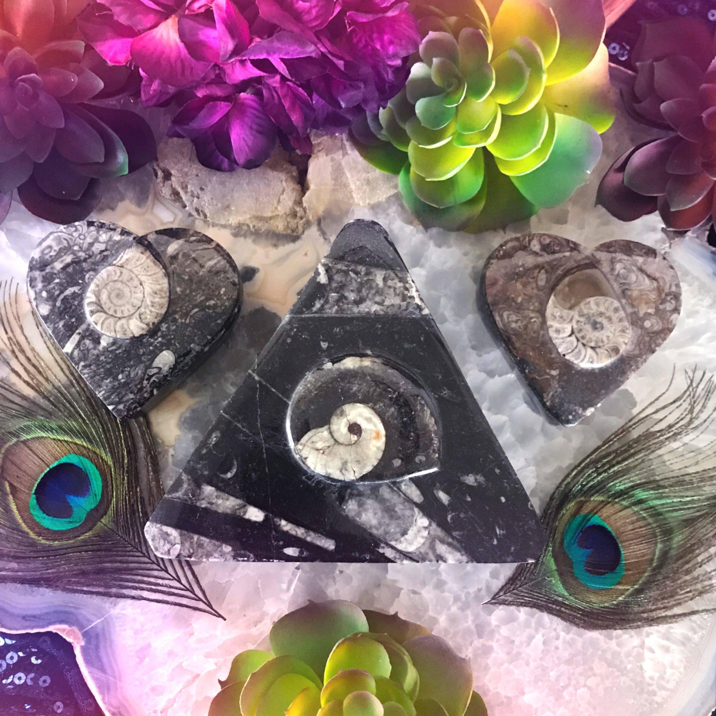 Sacred_Spiral_Orthoceras_Box_1of4_8_3