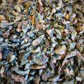Natural_Rainforest_Jasper_Chip_Stones_2of2_7_29