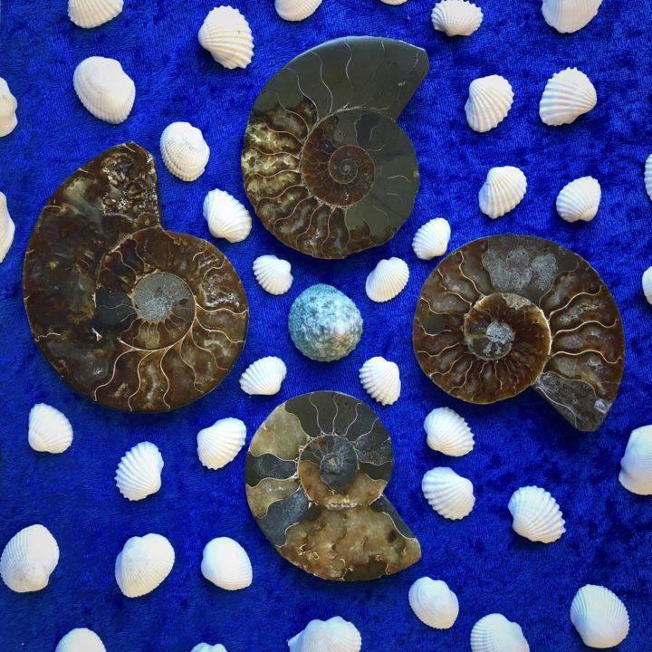 Ancient _Ammonite_DD_2of4_8_6