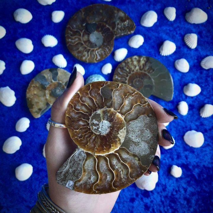 Ancient _Ammonite_DD_4of4_8_6